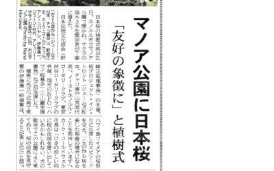 マノア公園に日本桜 2020年2月27日掲載